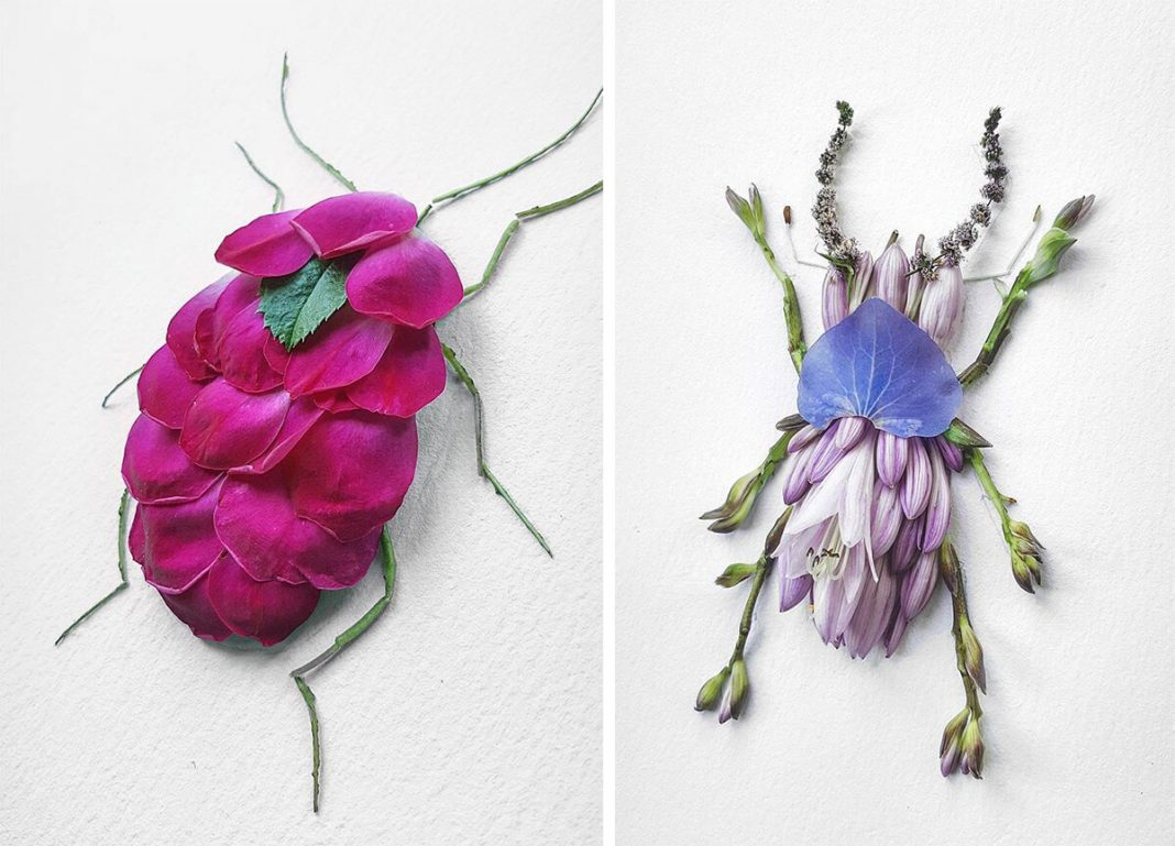 serangga dari bunga