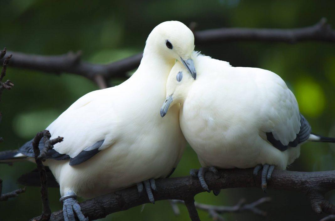 hal yang akan kamu pahami setelah bertemu soulmate relationship
