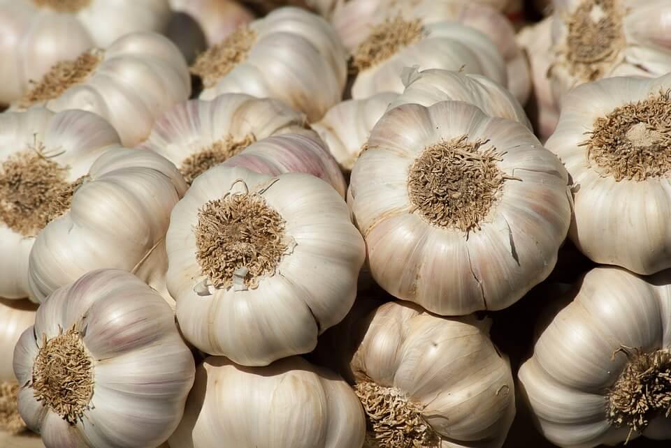 10 Makanan yang Sebaiknya Tidak Disimpan di Dalam Kulkas bawang putih