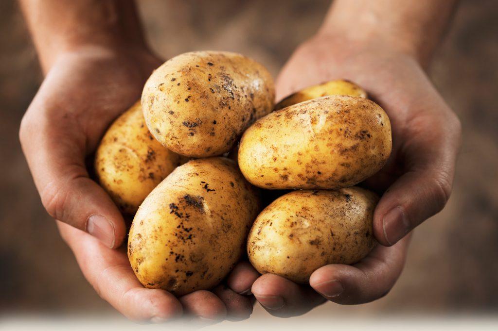 kentang-potatoesdotcom
