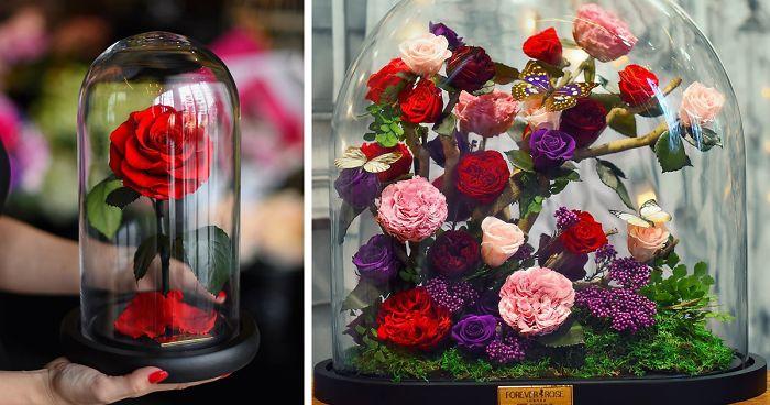 Forever Rose, Mawar Ala Beauty and The Beast yang Cantik dan Awet - Portal Wanita Muda