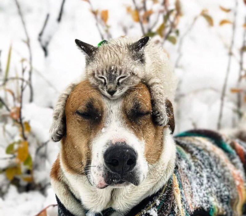 Galeri: Henry dan Baloo Membuktikan Bahwa Kucing dan Anjing Bisa Akur dan Traveling Bersama!