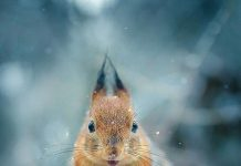 Fotografer ini Berhasil Memotret Hewan yang Berpose seperti Model Profesional