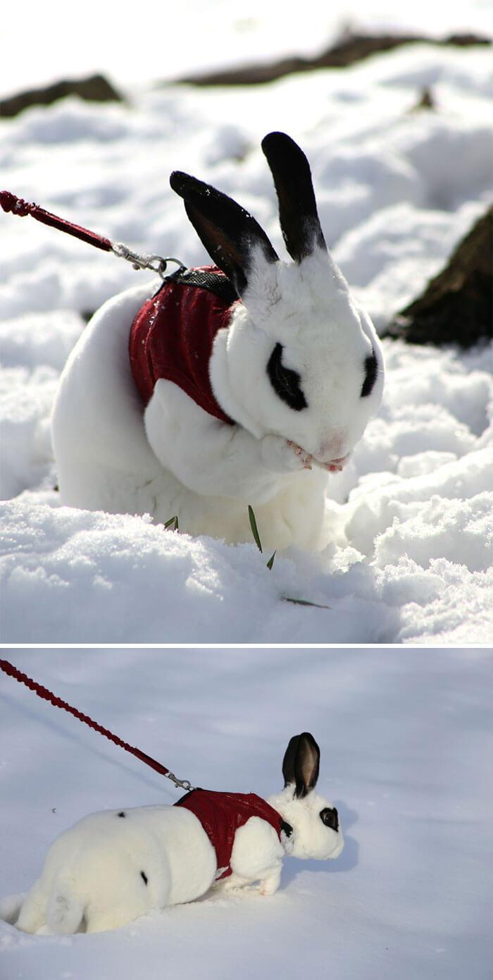 Cuteness Overload: Reaksi Para Hewan saat Pertama Kali Bertemu Salju