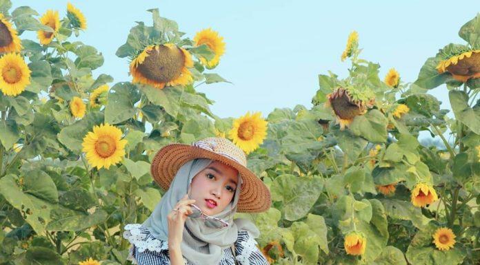 Kebun Bunga Resoinangun di Bantul, Pesona Eksotis Hamparan Bunga