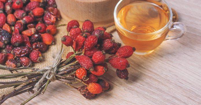 Sudah Kenalan dengan Rosehip Seed Oil dan 7 Manfaatnya untuk Kulitmu?