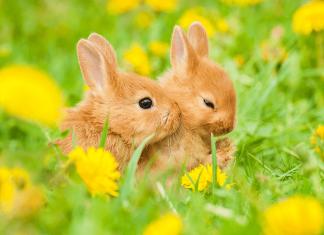 Negara Bagian California Resmi Melarang Uji Coba Produk Kecantikan pada Binatang