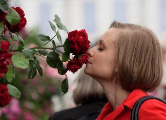 Butuh Mood Booster? Manfaatkan 8 Bunga dan Tanaman Herbal Berikut