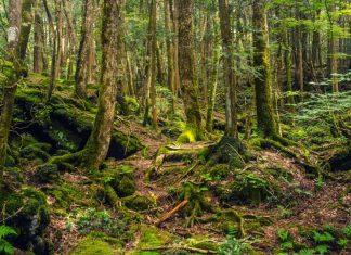 Kontroversi Video Qorygore di Hutan Aokigahara