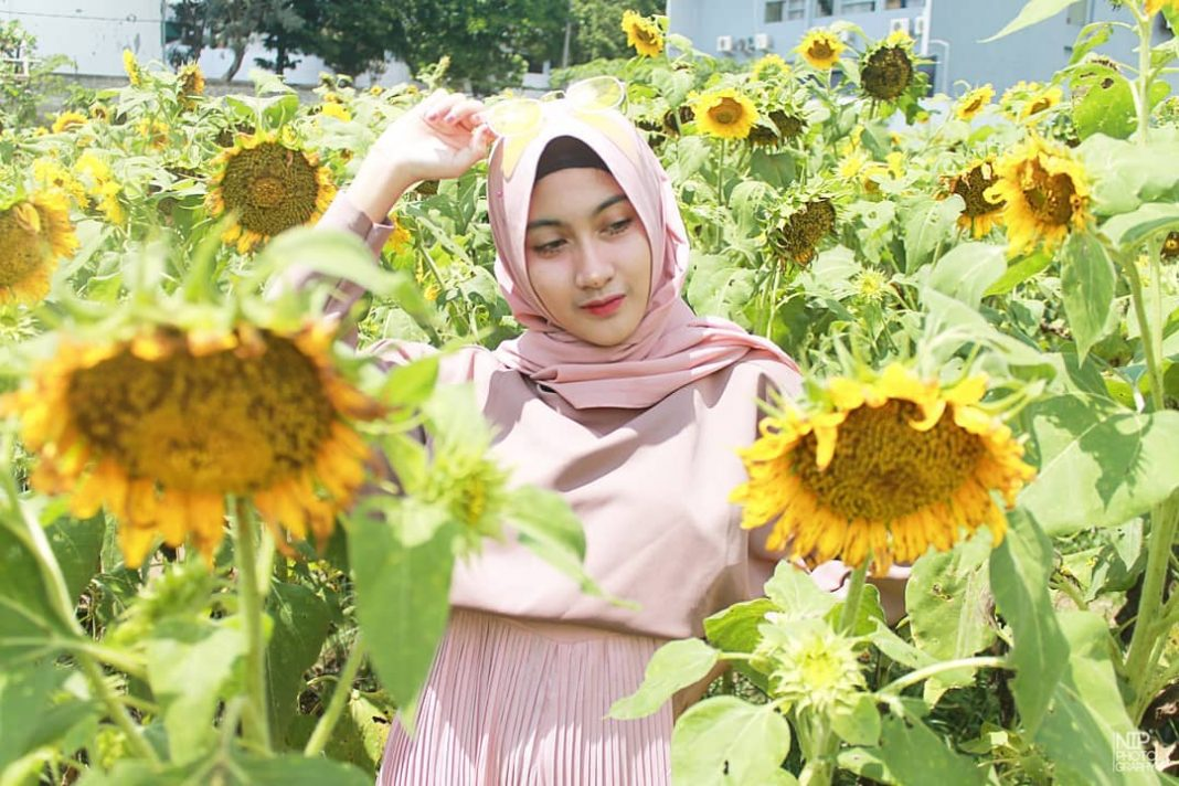 Wisata Bunga Matahari di Jawa Timur, Tak Perlu Jauh-jauh ke Saraburi Thailand