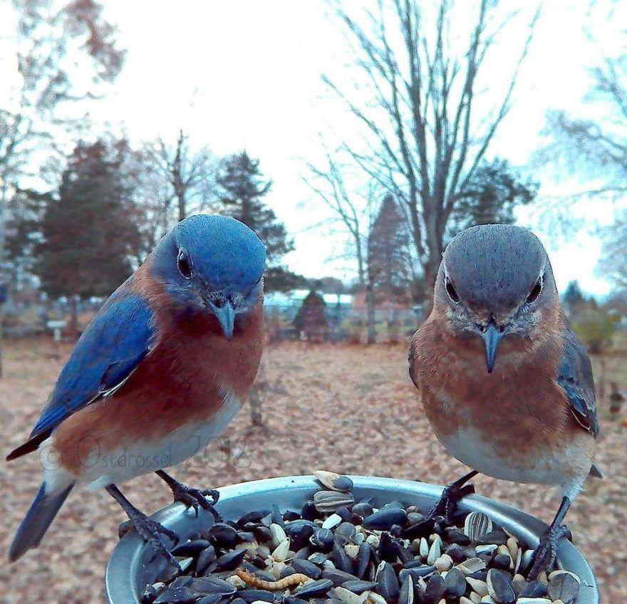 Menggemaskannya Pose Burung-burung dalam Photobooth Ini