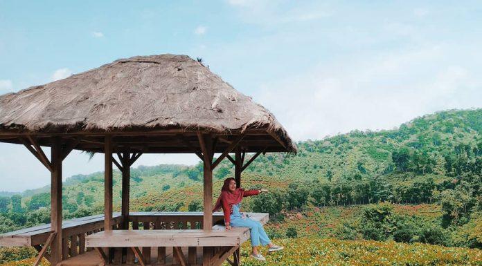 Perkebunan Teh dengan Spot Instagenic di Jawa Timur, Bikin Traveling Tambah Gencar
