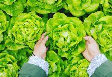 Yuk, Kenalan dengan Diet Flexitarian