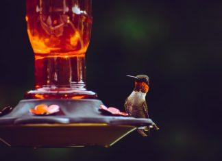 Undang Burung-Burung Cantik ke Halaman Rumah dengan DIY Bird Feeder Ini