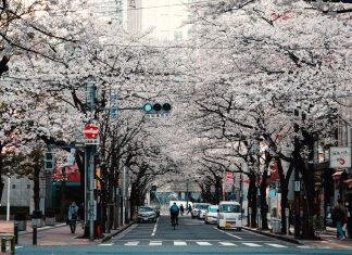 Ingin Belanja Baju di Jepang? Perhatikan Hal Berikut! (Part 2)