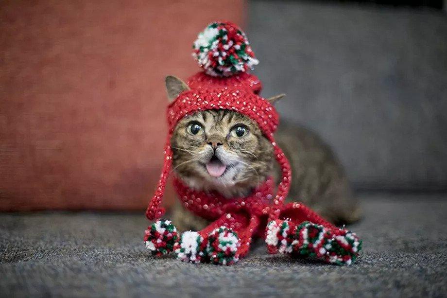 Kucing Internet, Lil Bub, Meninggal Dunia