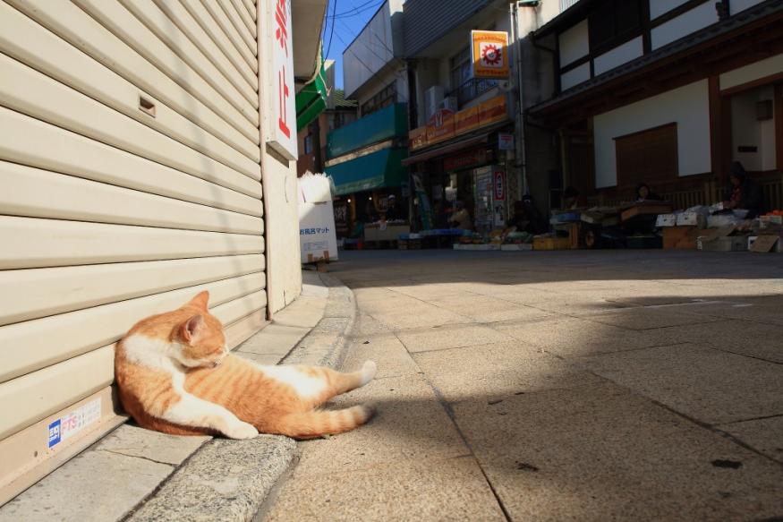 11 Wisata Pulau Kucing di Jepang