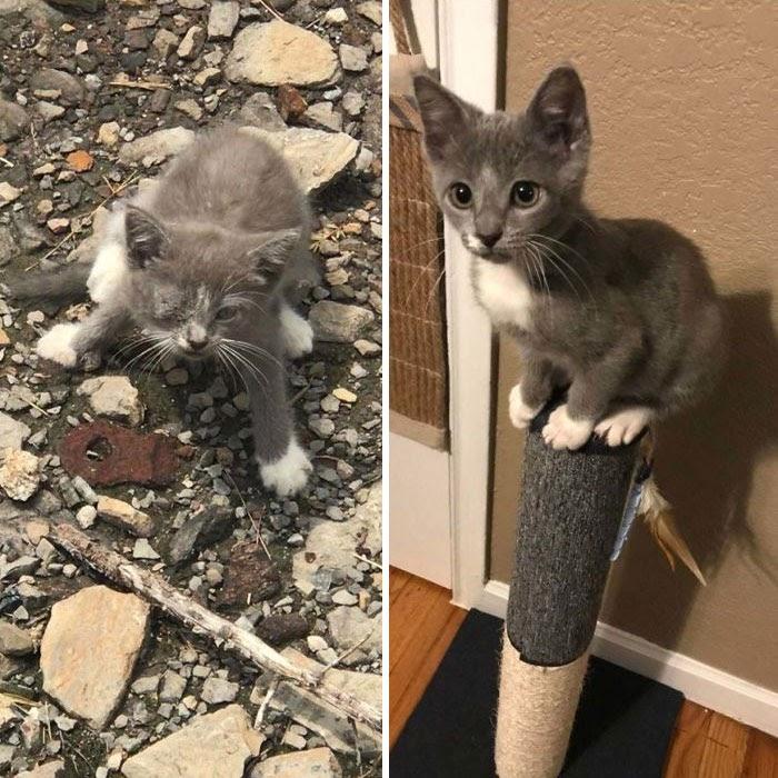 10 Gambar Kucing Before dan After Diadopsi, Beda Banget!