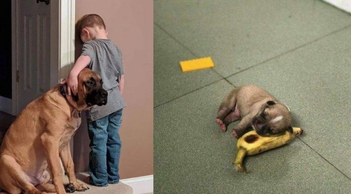 10 Potret Anjing yang Bikin Senyum Gemas sampai Menangis Terharu