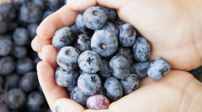 Hilangkan Bintik Hitam dan Garis Halus di Wajah dengan DIY Masker Blueberry Berikut Ini