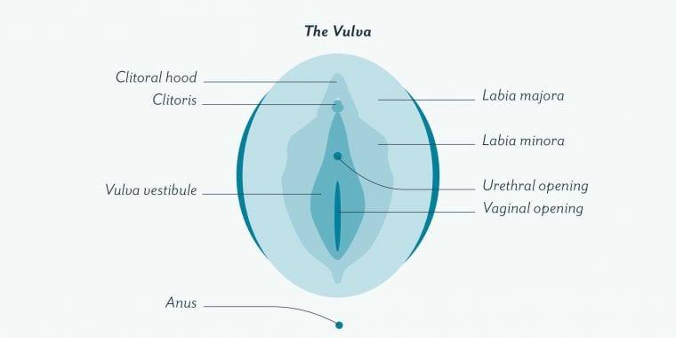 Cara Membersihkan Vagina dan Vulva yang Benar Menurut Para Ahli