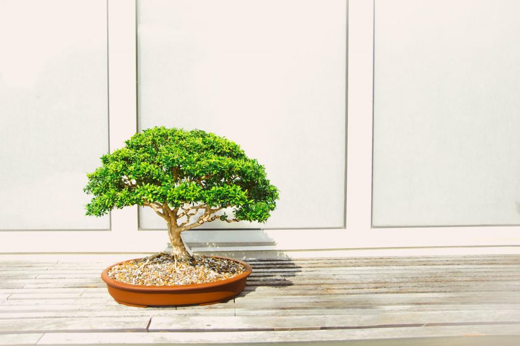 5 Tips Bagi Kamu yang Pertama Kali Mencoba Berkebun di Rumah