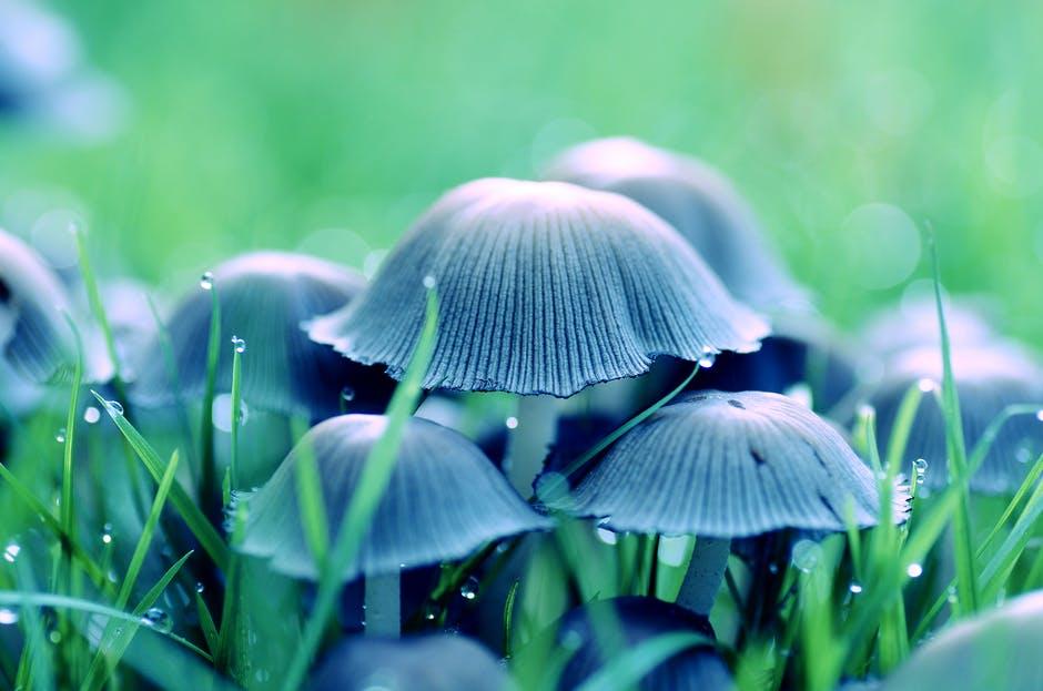 Jenis-jenis Jamur yang Biasa Masuk ke Bahan Skincare